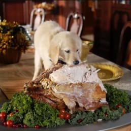 Happy Thanksgiving from Barks & Recreation Family Dog Services