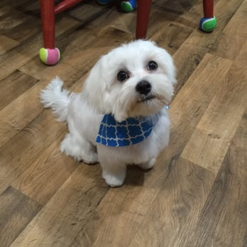 Pawsitively perfect pet salon pet groomers 109 s main for A perfect pet salon