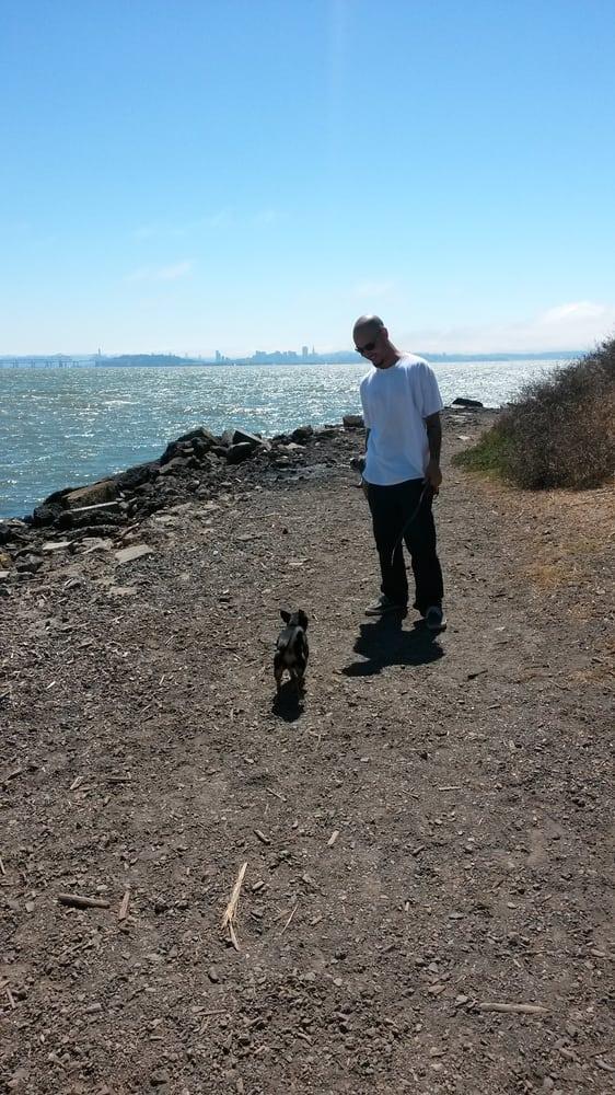 Dog Park Albany Ca