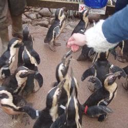 South Lakes Wild Animal Park, Dalton In Furness, Cumbria