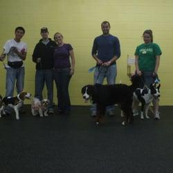 Pawsitive Paul S Dog Training Reviews