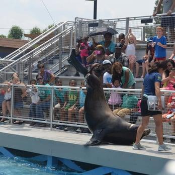 The New York Aquarium Brooklyn Ny United States Sea