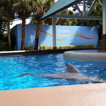 Seaworld Behind The Scenes Tour Review Orlando