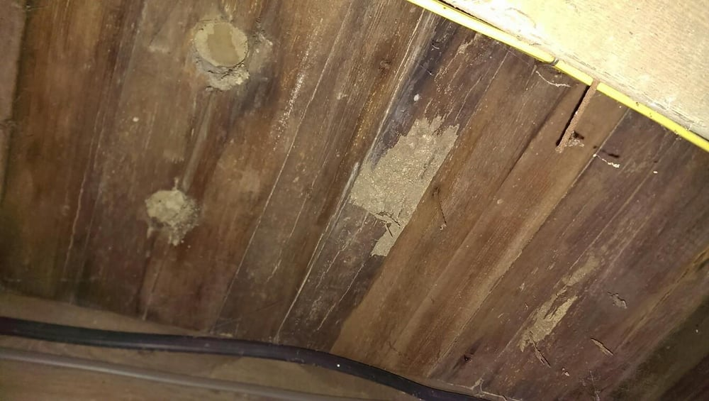 Eastern Subterranean Termite Damage To Sub-floor In Basement | Yelp