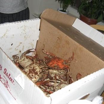 Bay Island Crabs Monroe St