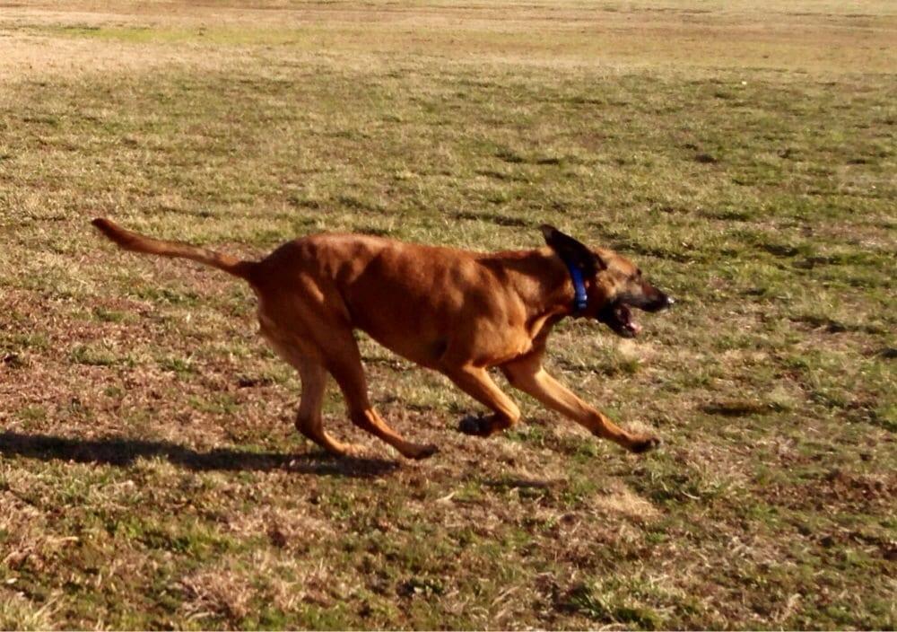 Bayville Dog Park