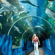 Oceanarium, Bournemouth, Dorset