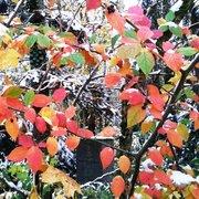 Farbe Herbstlaub