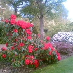the rhodos in bloom : heaven!