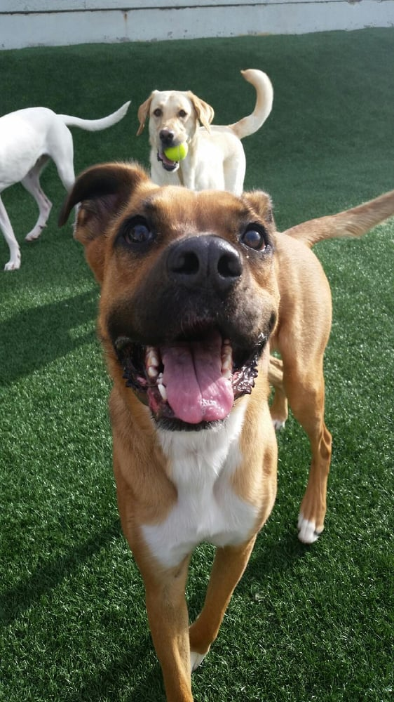 Doglife Broomfield, Dog daycare and dog boarding in Colorado | Yelp