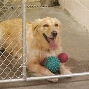 Puget Sound Pet Pavilion - One of our favorite guests - Tacoma, WA, Vereinigte Staaten