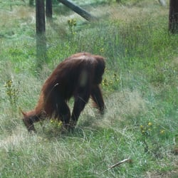 Monkey World, Wareham, Dorset
