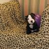 Hewlett Animal Hospital: Pet Sitting