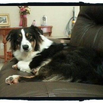 Dog Day Care In Elk Grove Ca