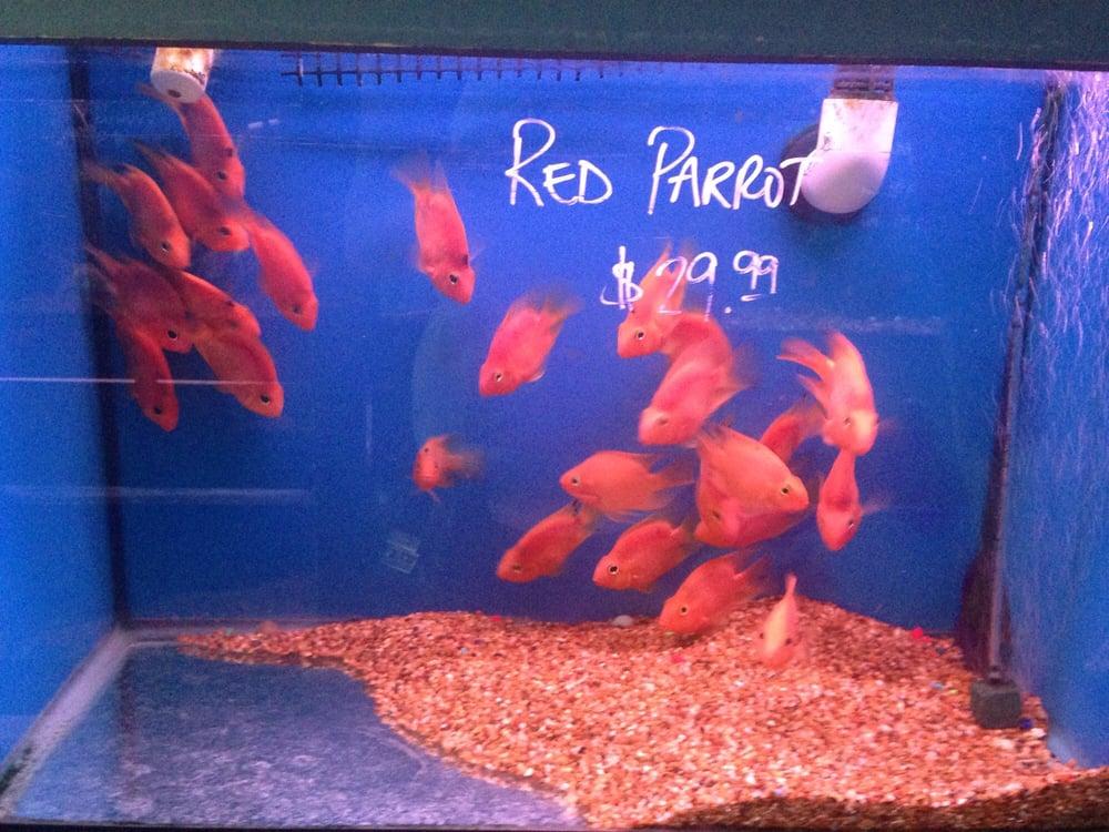 Pet fish houston xtreme fish pets alief houston tx for Fish store houston