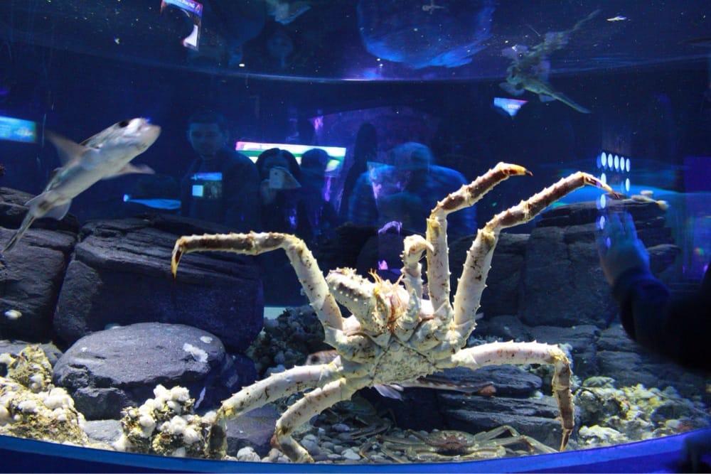 King Crab Underwater King Crab Toronto on