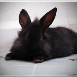 montecito veterinary center 12 fotos 67 beitr ge tierarzt 4900 sonoma hwy santa rosa. Black Bedroom Furniture Sets. Home Design Ideas