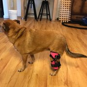 Photo Of Posh Dog Knee Brace Palm Coast Fl United States