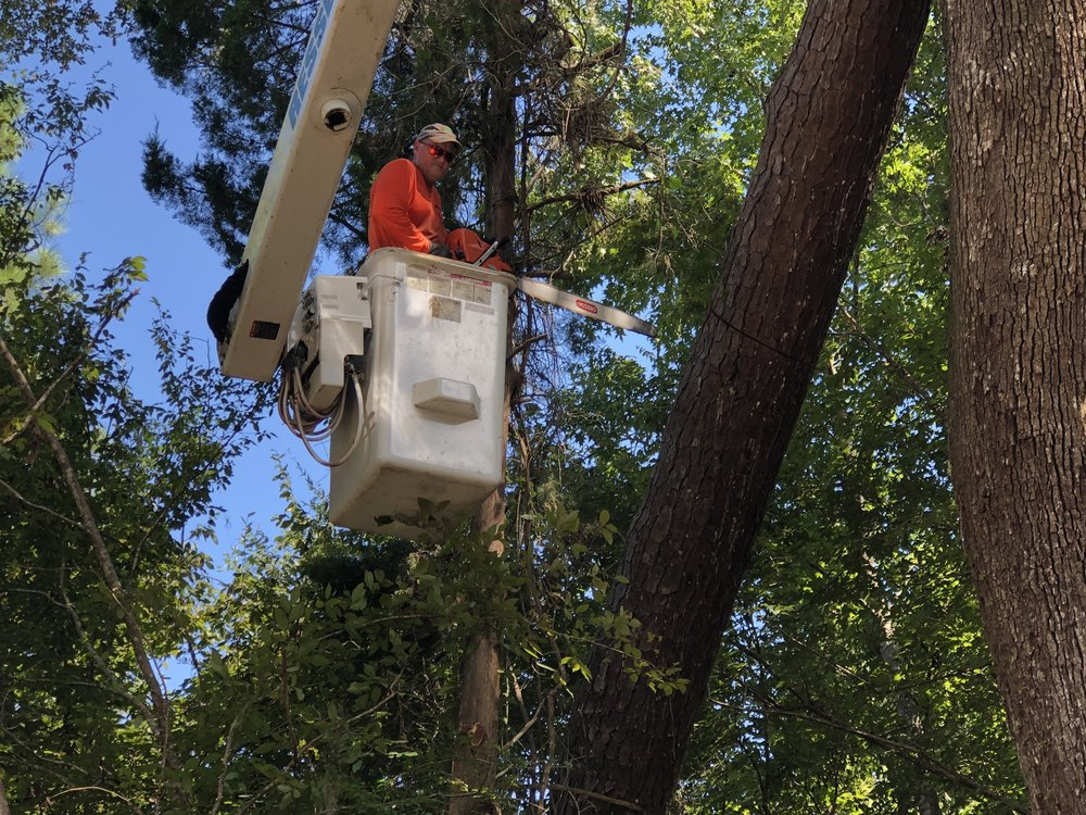 Ressler's Professional Tree Service: 14591 NW 66th Ave, Chiefland, FL