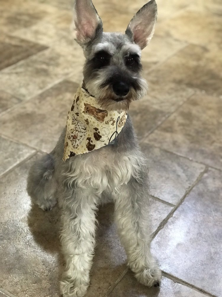 Bonita Dog Grooming: 4244 Bonita Rd, Bonita, CA