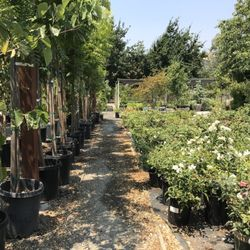 Photo Of Lisa Arnold Nursery S Sunol Ca United States