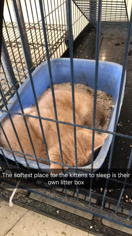 The Pet Shoppe: 2144 Springs Rd, Vallejo, CA