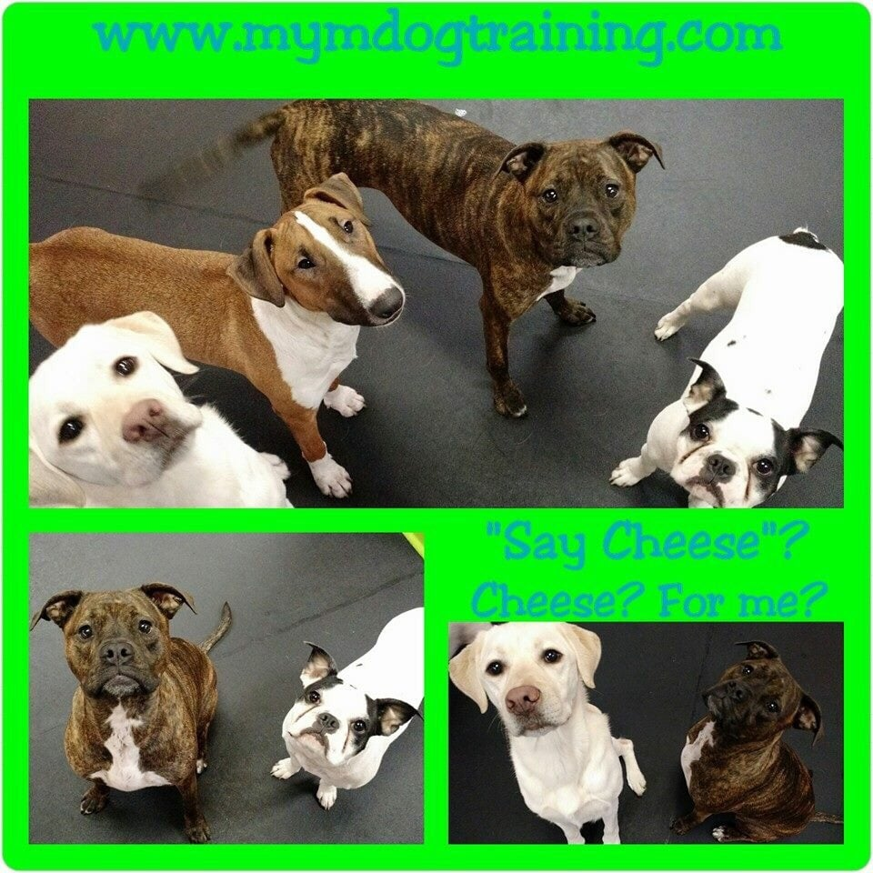 Mind Your Manners Dog Training & Daycare: 10501 NE Hwy 99, Vancouver, WA