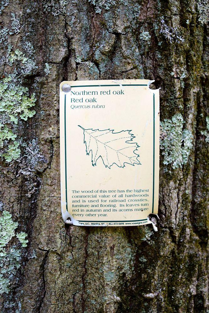 Westconnaug Meadows Hiking Trail: 49 George Washington Hwy, Clayville, RI