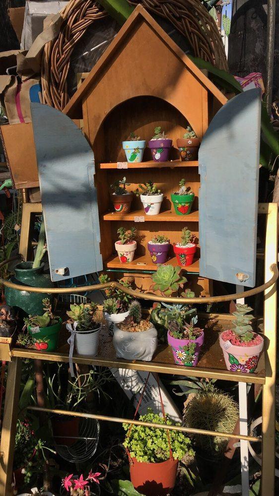 Francis's Cactus Succulents