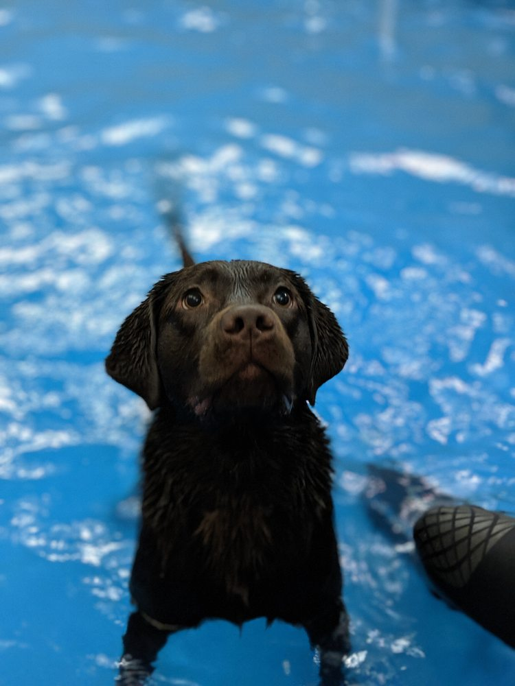 Doggy Paddle Aquatic Center For Dogs: 1430 W Willow St, Chicago, IL