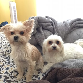 Photo Of Pierces Precious Puppies