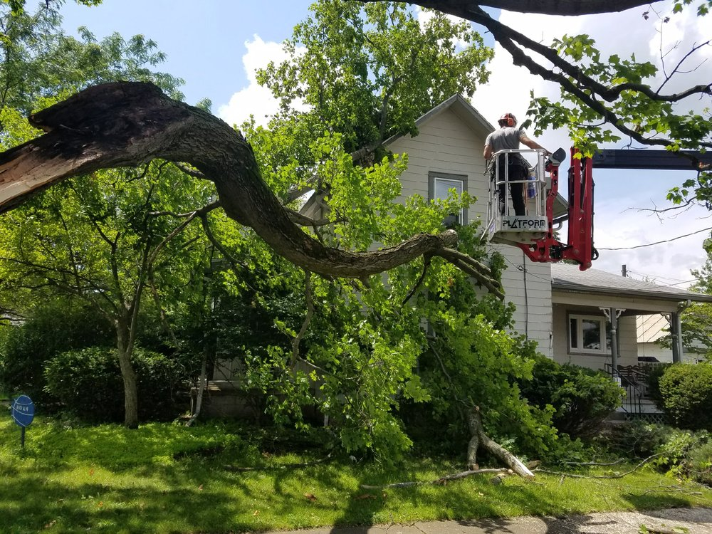 Photo of Dolce's Tree Service: Mansfield, OH