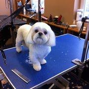 Tlc dog grooming 20 photos pet groomers 585 mohawk road w canada photo of tlc dog grooming hamilton on canada solutioingenieria Gallery