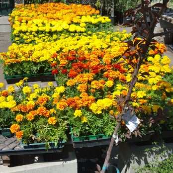 San Gabriel Nursery Amp Florist 274 Photos Amp 167 Reviews