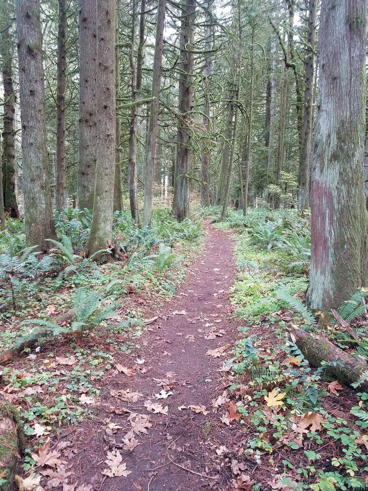 Salmon-Morgan Creeks Natural Area: NE 161st Ave, Hockinson, WA