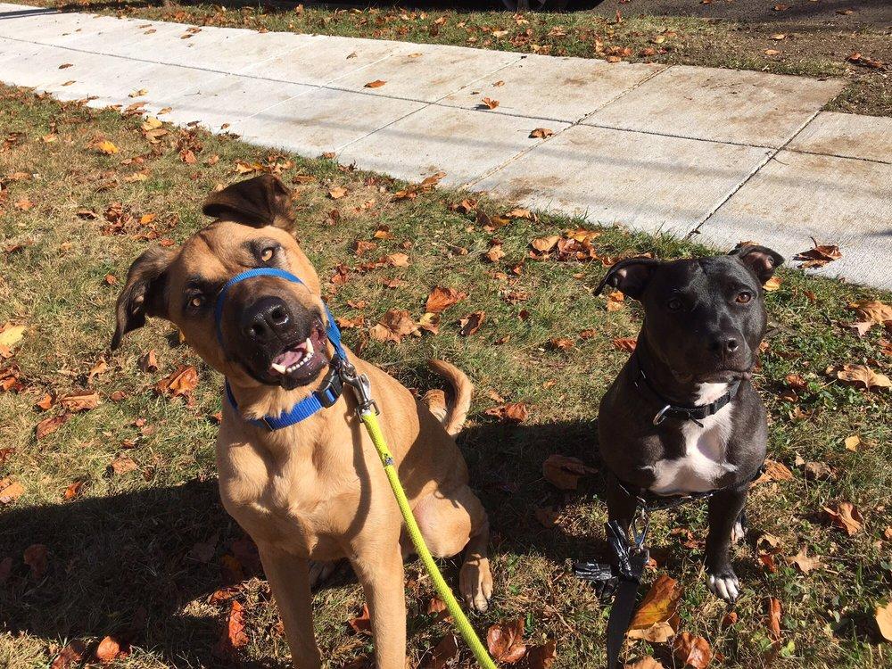 Happy Pet Loving Care Services