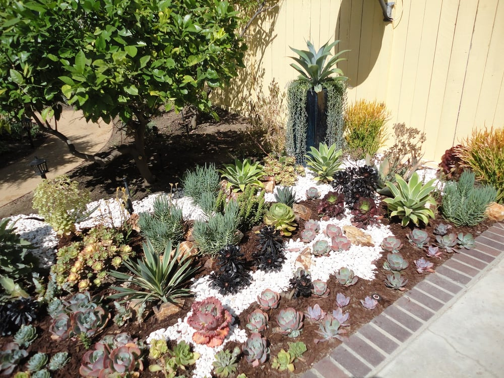 Succulent garden design yelp for Garden design using succulents
