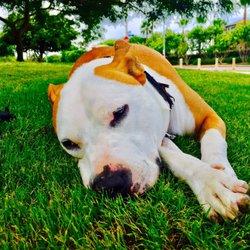 Pet Minded - 100 Photos & 61 Reviews - Dog Walkers