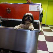 Wag n wash scottsdale 81 photos 120 reviews pet groomers photo of wag n wash scottsdale scottsdale az united states solutioingenieria Image collections