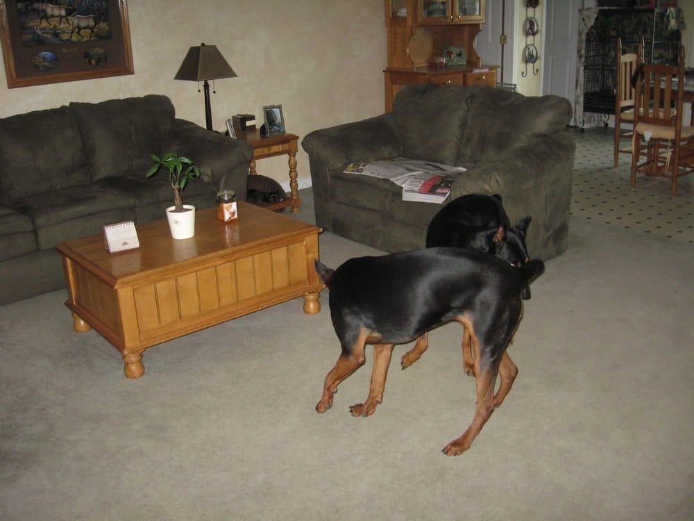 Best Friends Critter Sitter: 4012 Pharris Rd, Cookeville, TN