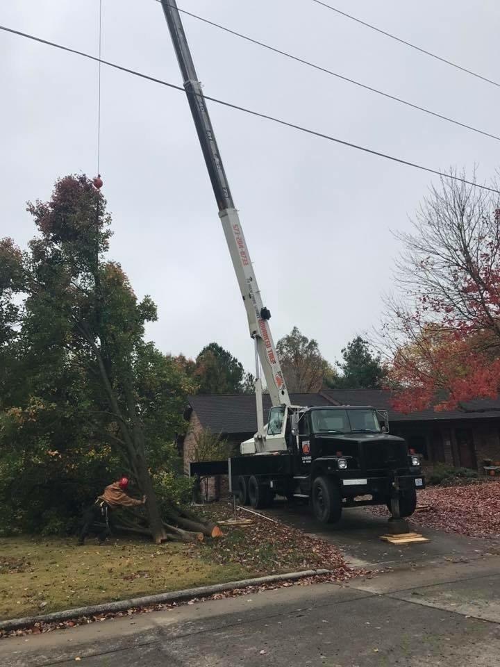 Advanced Tree Service: 3869 N High St, Jackson, MO