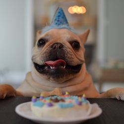 Canine Cafe 113 Photos 54 Reviews Pet Stores 125 Remount Rd