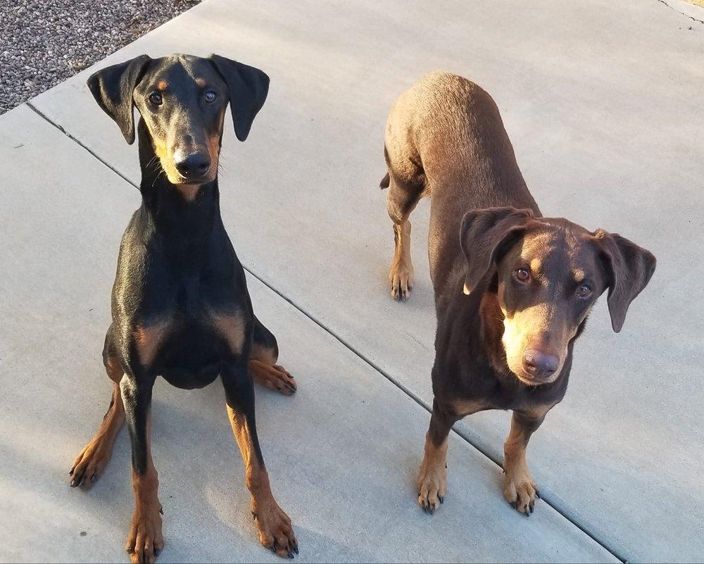 Bed & Biscuit Pet Resort: 5525 S State Rt 69, Mayer, AZ