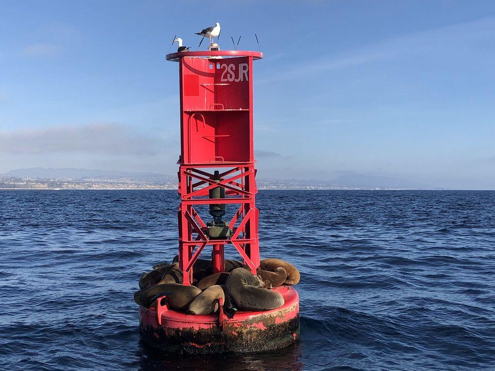 Captain Dave's Dolphin & Whale Watching Safari: 24440 Dana Point Harbor Dr, Dana Point, CA