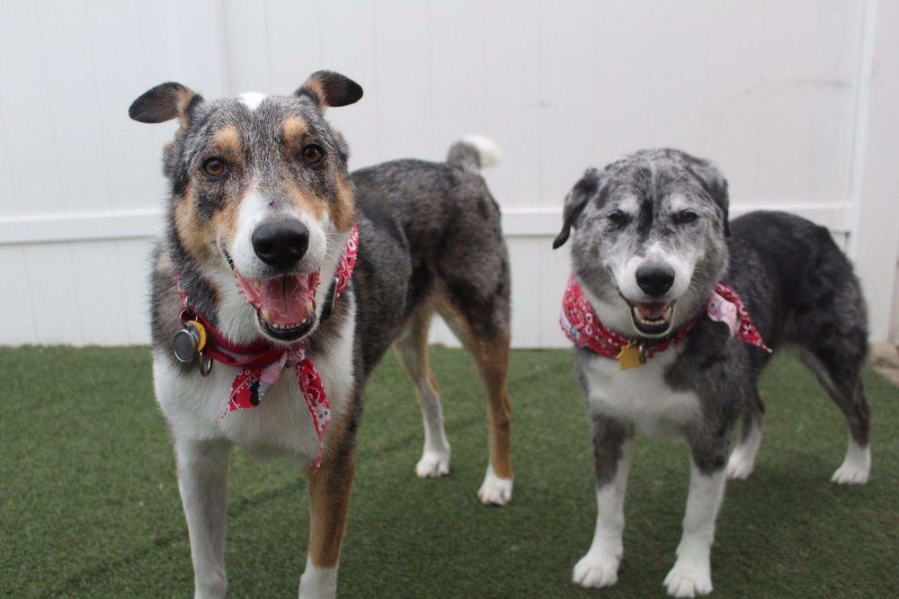 Y Bark Alone Doggy Daycare: 10390 Watson Rd, Sunset Hills, MO