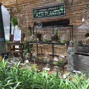 Mums Photo Of Weston Nurseries Hopkinton Ma United States