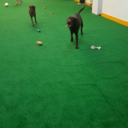 Gus Indoor Dog Park And Daycare Dog Parks 425 E