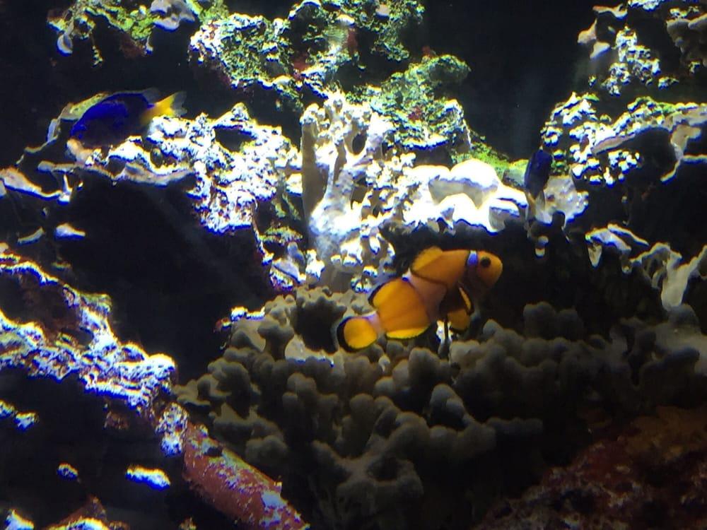Aquarium Sea Life