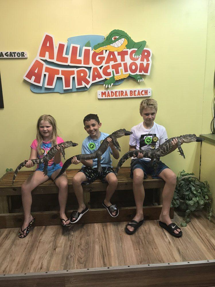 Alligator Attraction: 12973 Village Blvd, Madeira Beach, FL