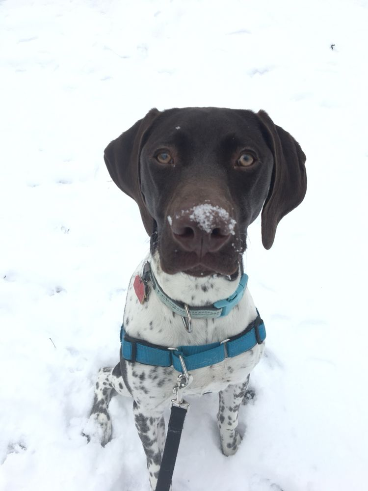 Waggin' Tails Pet Care Services: Ashburnham, MA